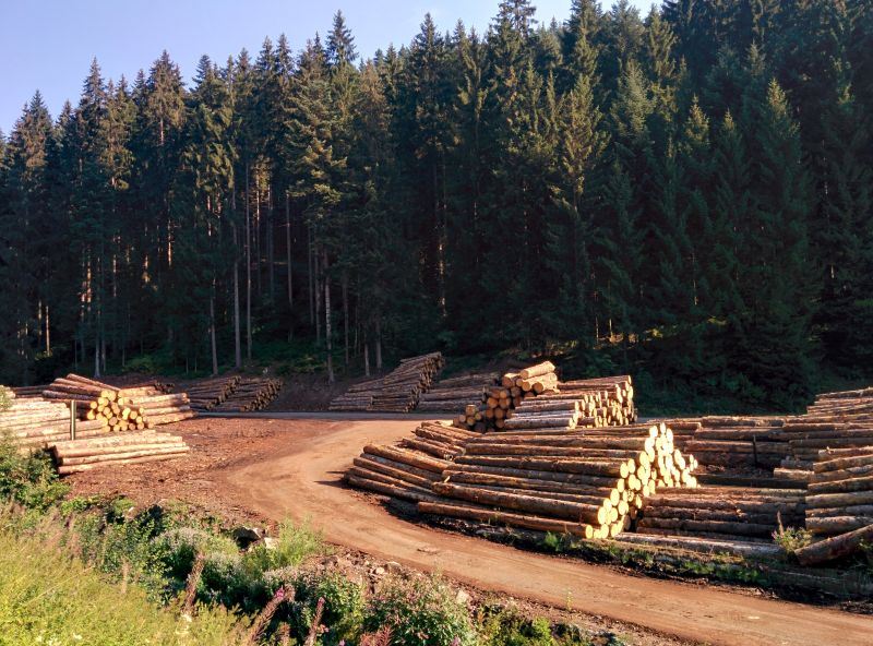 lots of logging in the black forest
