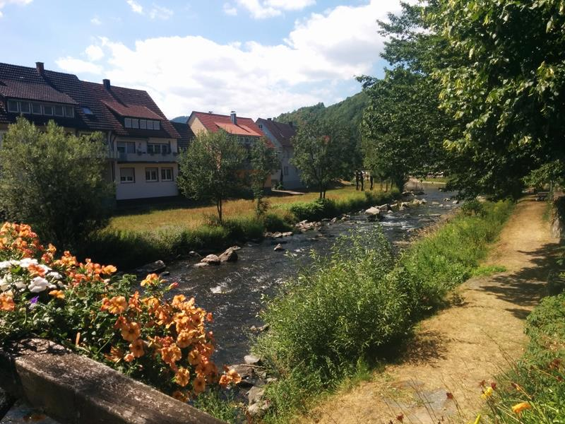pretty river in the black forest