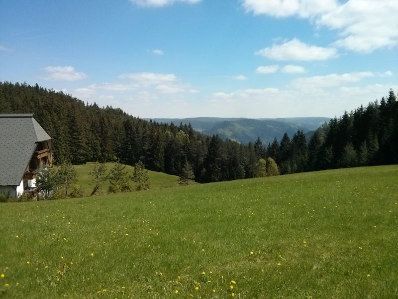 typical Black Forest scenery