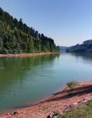 swimming in the black forest