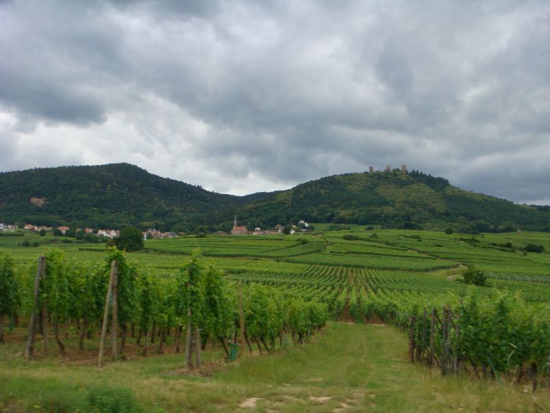 Vineyard Tour Alsace