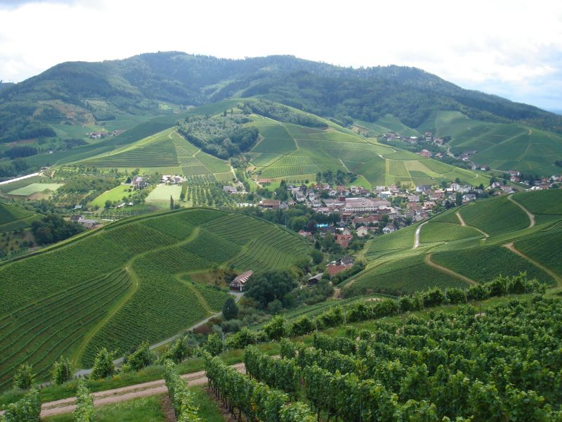 Vineyards in the Black Forest